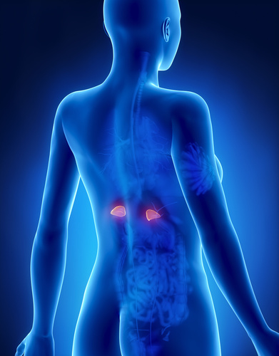 Pop Quiz: Do You Know Your Adrenals?